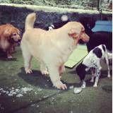 Achar adestrador para cachorros em Raposo Tavares