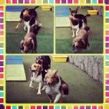 Achar adestrador para cachorros no Ibirapuera