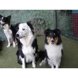 Achar adestrador para cachorros no Jardim Bonfiglioli