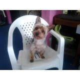 Achar adestrador para cães em Embu Guaçú