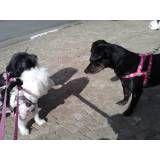 Achar adestrador para cão no Jardim Europa