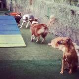 Achar adestrador para cão no Rio Pequeno