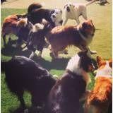 Achar adestradores para cachorro na Cidade Jardim
