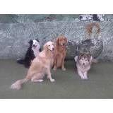 Achar adestradores para cachorro na Vila Andrade