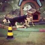 Achar adestradores para cachorro no Jardim São Luiz