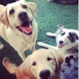 Achar adestradores para cães em Cajamar