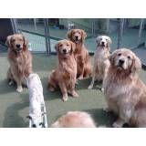 Achar adestradores para cães no Ibirapuera