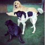 Achar adestradores para cão em Santana de Parnaíba