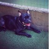 Achar adestradores para cão na Cidade Jardim