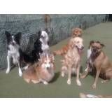 Achar adestradores para cão no Campo Belo