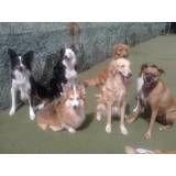 Achar adestradores para cão no Jardim Bonfiglioli