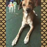 Achar adestramento de cachorro  em Cotia