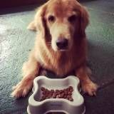 Achar adestramento de cachorros na Cidade Dutra