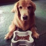 Achar adestramento de cachorros no Ibirapuera