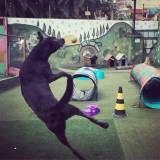 Achar adestramento de cães na Água Branca