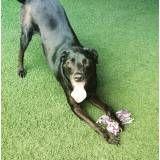 Achar adestramento de cão no Rio Pequeno