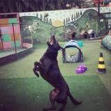 Achar adestramento para cachorro no Rio Pequeno