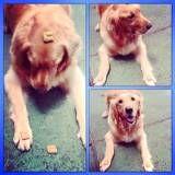 Achar adestramento para cães  em Perdizes
