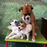Achar adestramento para cão em Santo Amaro