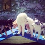 Achar creche cão em Santana de Parnaíba