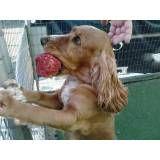 Adestrador de cachorro