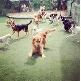 Adestrador de cãesem Pinheiros