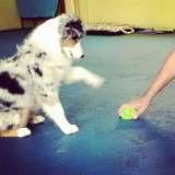 Adestrador de cãesna Berrini