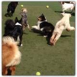 Adestrador de cãesna Vila Olímpia