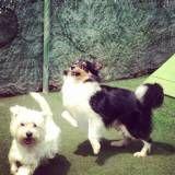 Adestrador de cãesno Brooklin