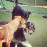 Adestrador para cachorro em Itapevi