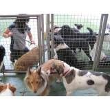 Adestrador para cachorro na Saúde