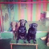 Adestrador para cachorro no Socorro