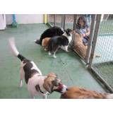 Adestrador para cachorros no Pacaembu