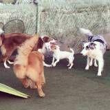 Adestrador para cachorros no Socorro