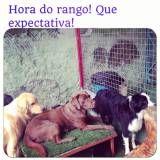 Adestrador para cães em Sumaré