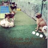 Adestrador para cães no Jardins
