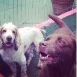 Adestrador para cãesna Vila Andrade