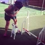 Adestrador para cão em Santana de Parnaíba