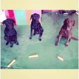 Adestrador para cão em Vargem Grande Paulista