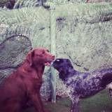 Adestrador para cão na Vila Andrade