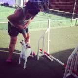 Adestrador para cão no Alto de Pinheiros