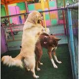 Adestrador para cão no Sacomã