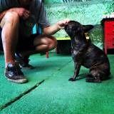 Adestradores de cachorro no Morumbi