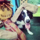 Adestradores para cachorro em Embu Guaçú