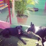 Adestradores para cachorro em Vargem Grande Paulista