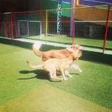 Adestradores para cães na Cidade Dutra