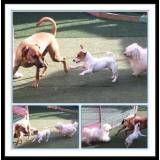 Adestradores para cães no Ipiranga