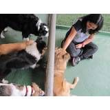Adestradores para cães no Jaguaré