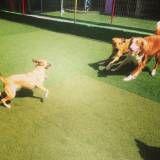 Adestradores para cães no Jardim Paulistano