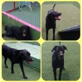 Adestradores para cão em Santana de Parnaíba